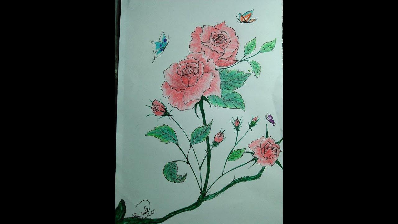 Vẽ hoa hồng đơn giản_How to draw Roses