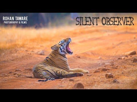 Silent Observer, Wildlife Film on Tadoba Andhari Tiger Reserve