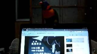 キャシャーンの動画を見ていたら、突然ルーちゃんが歌い踊り始めました。
