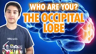 Sorry, who are you? The Occipital Lobe