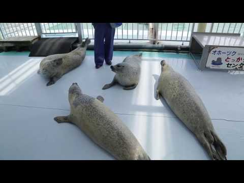 A trip to Mombetsu in Hokkaido – Soothe your soul with a visit to Tokkari Center to see the seals.