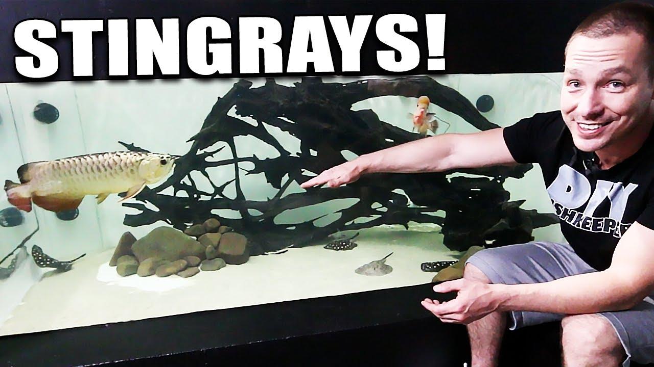 2-000g-aquarium-gets-stingrays