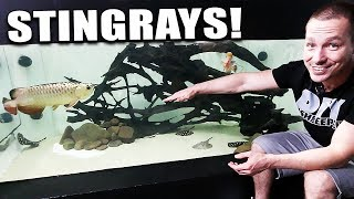 2,000G AQUARIUM GETS STINGRAYS!