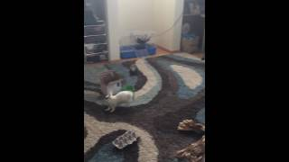 Bunny and Ferret Play