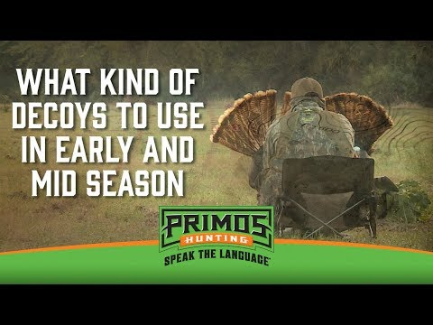 What Kind of Turkey Decoys to use in Early and Mid-Season