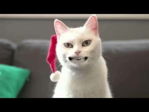 Geile Katze