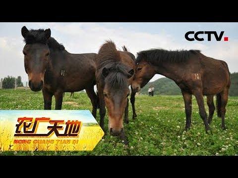 《农广天地》宁强马 20180910 | CCTV农业