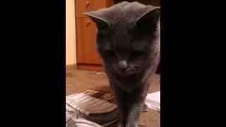 Реакция у кошки на скотч)