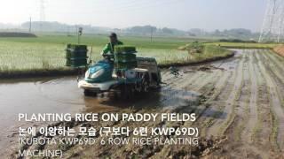 Rice Planting in Korea 모내기 이앙하는 모습