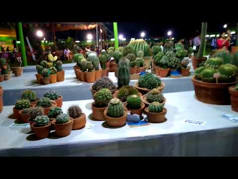 Best flower show in India 2018 (part-2)