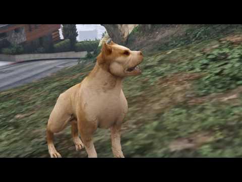 Pitbull for GTA V PC.