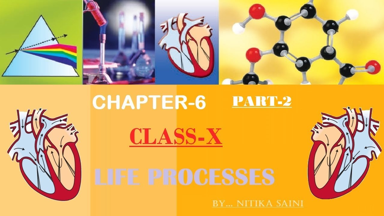 PART 2 LIFE PROCESSES CHAPTER 6 SCIENCE NCERT CLASS 10 ...