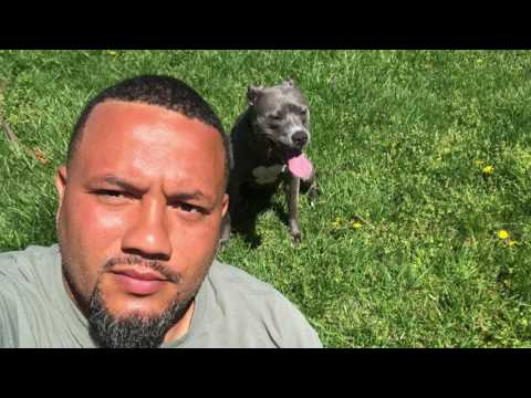 18-Month Old Pit Bull, Zeeva!  Pit Bull Dog Training | Pit Bull Off Leash K9 Training