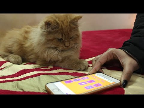KITTEN epic reaction to the Mobile Phone Game| Wildly Indian