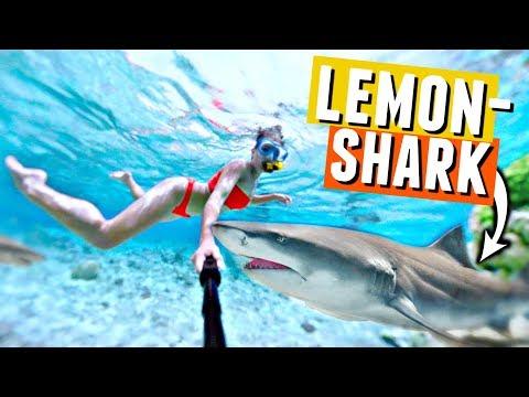 SWIMMING WITH SHARKS in Bora Bora!🦈💦 Black fin and lemon sharks!
