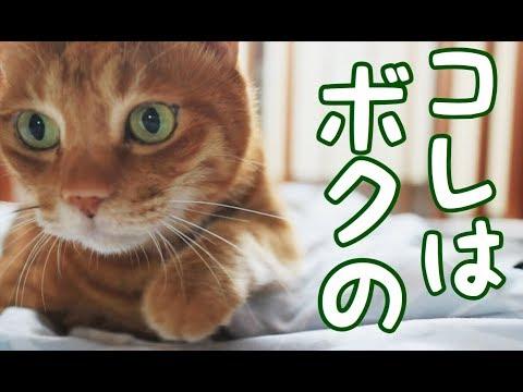 猫が「ママでもダメ!」 保護猫育て第302話