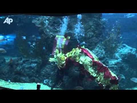 Raw Video: Underwater Dragon Dance in Bangkok