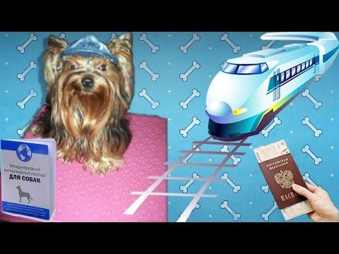 Как перевозить собаку в поезде
