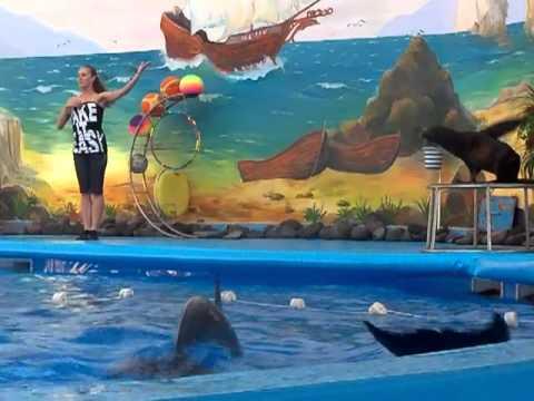 дельфинарий Немо в Ереване -1