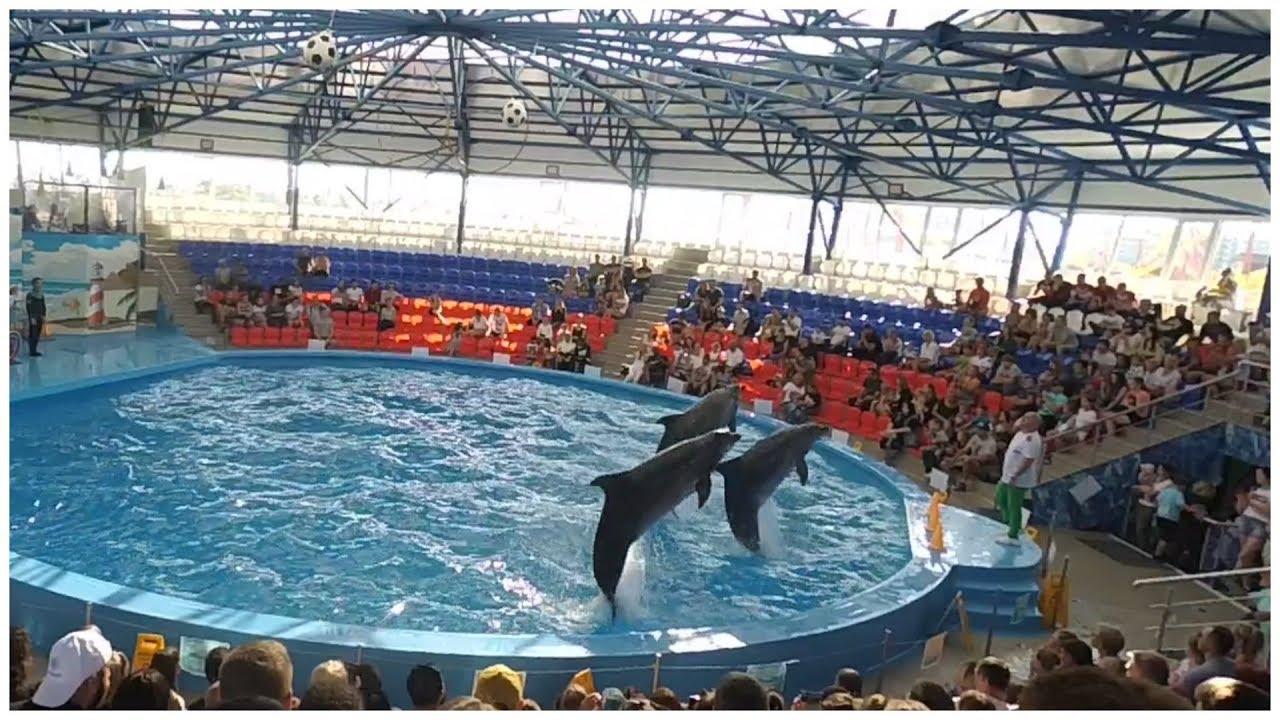 дельфинарий в рязани фото является крупным успешным