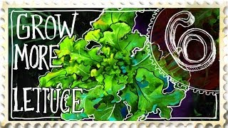 How to Grow More Lettuce - Suburban Homestead EP6
