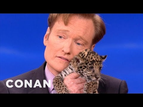 Animal Expert David Mizejewski: Baby Jaguars & Binturong - CONAN on TBS