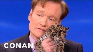 Animal Expert David Mizejewski: Baby Jaguars & Binturong  CONAN on TBS