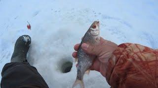 Зимняя рыбалка 2021 в феврале Ловля плотвы на мормышку