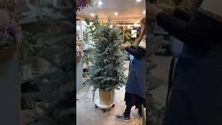 크리스마스 트리(christmas tree)