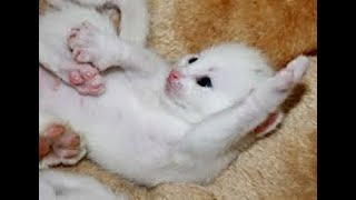 Cute Pets - Baby Cats Doing Funny Things 2020