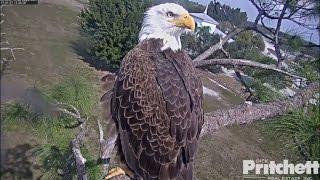 swfl-eagles-starlings-kestrel-visit-m15-delivers-ufo-huge-fish-1-27-17
