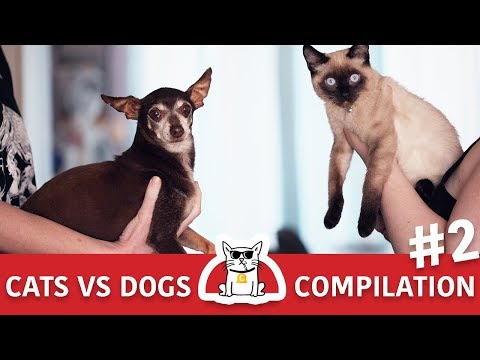 cats-vs-dogs-fights-compilation-#2