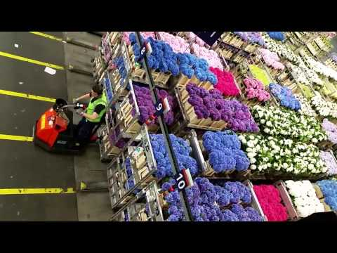 Aalsmeer Royal Holland Flower Auction 2016 08 24