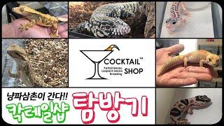 파충류 전문점 - 칵테일샵 방문기, 냥파삼촌이 간다!!