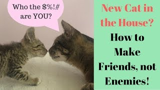 My Cat HATES my New Kitten  Help? How to Introduce Cats!