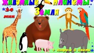 Сборник Животные планеты земля. Изучение цифр и цвета. Развивающие мультики для детей