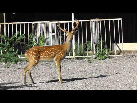 Odessa Zoo Ukraine 22.8.2011 (Odessan eläintarha Ukraina)