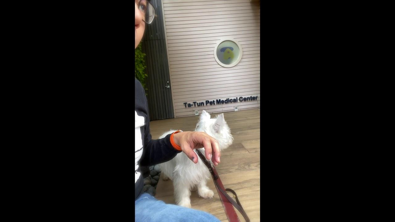 【混混成長日記】Day1 利用早餐的訓練 - YouTube