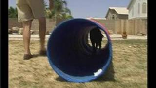 The Tunnel Command In Dog Training : Tunnel Command In Dog Training: Height Of Tunnel