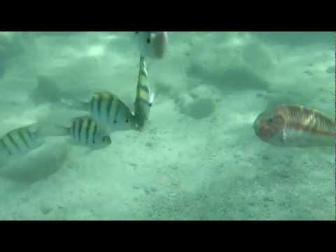 Sony XPERIA Acro S underwater
