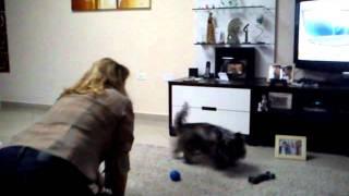 Bart, O Cairn Terrier Mais Aclamado Do Brasil 2