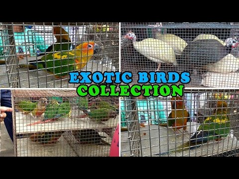 EXOTIC BIRDS COLLECTION IN KOLKATA BIRDS MARKET