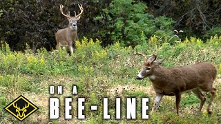 Bucks on a Bee-Line(, 2016-08-18T19:37:15.000Z)