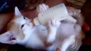 Котенок пьет молоко из бутылочки