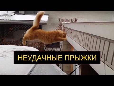Как прыгают кошки