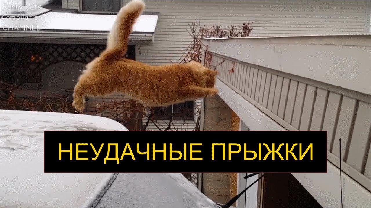 Неудачные прыжки котов и кошек, смешные кошки