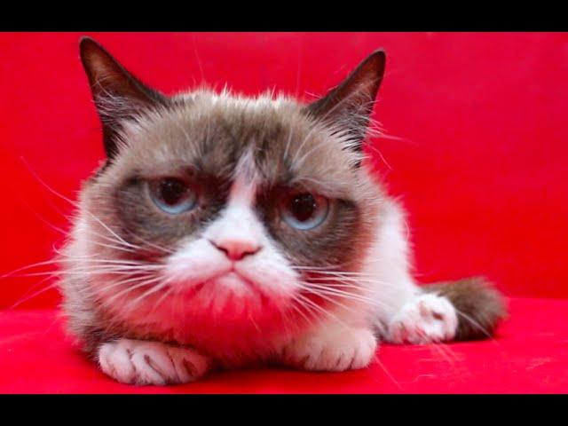 Grumpy Cat S Worst Icebucketchallenge Ever Grumpy Cat 174