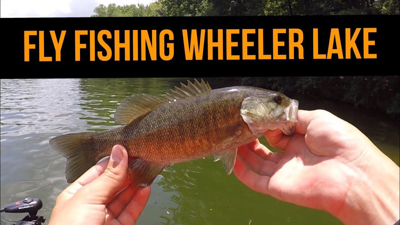 Fly fishing wheeler lake alabama youtube for Wheeler lake fishing report