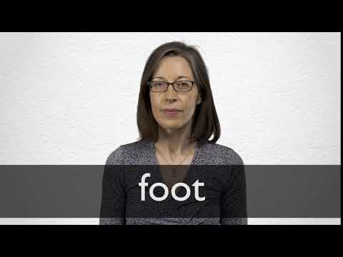 Foot Definition And Meaning Collins English Dictionary