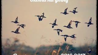 охота на утку в украине видео